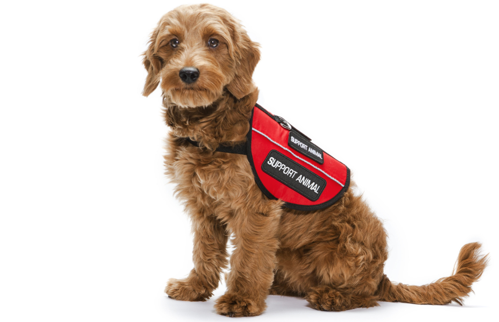 5 Things Everyone Should Know About Service Dogs